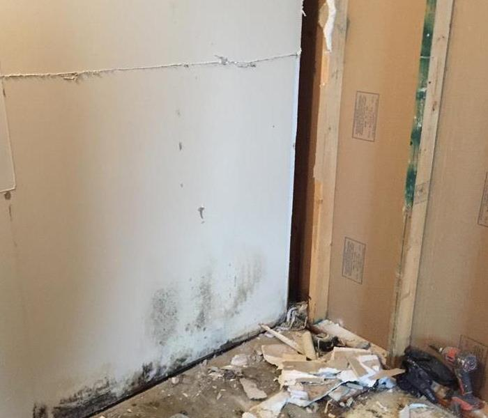 Mold Remediation Mold Damage Tips in Louisville, Ohio